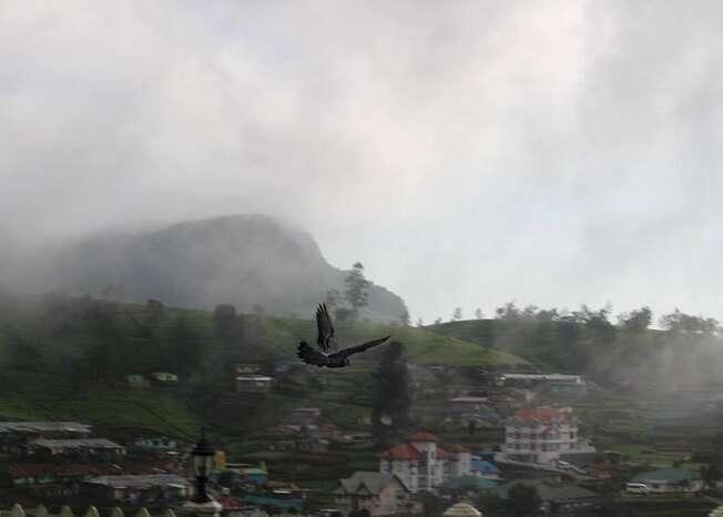 Early morning mist in Nuwara Eliya