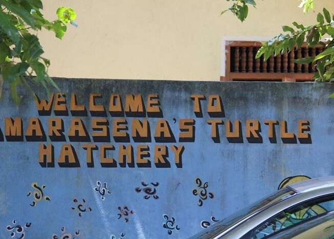 Turtle hatchery near colombo