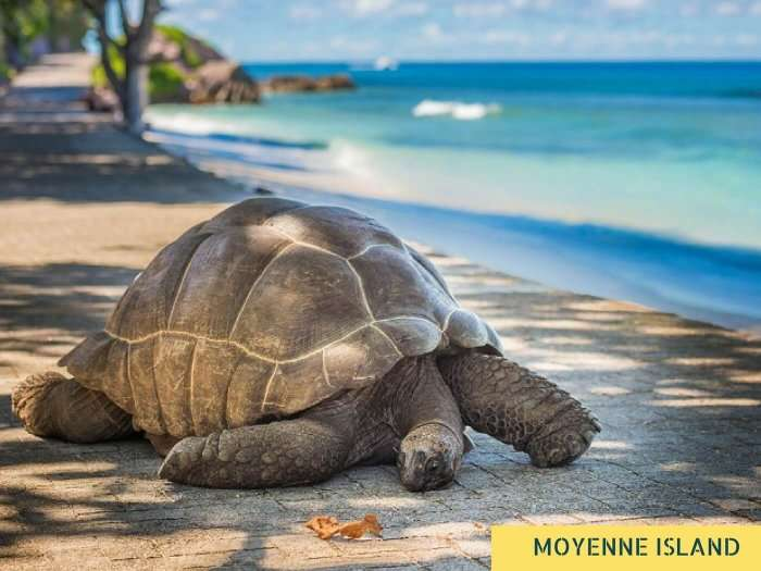 A tortoise on the banks of the Moyenne Island