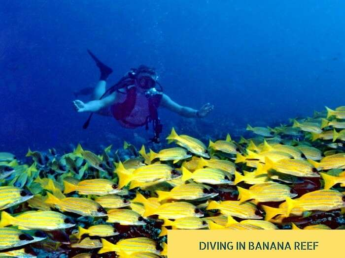 A person goes scuba diving at the Banana Reef in Maldives