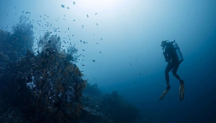 Diving in Amed