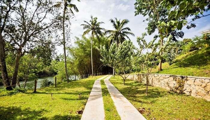 Lush green walkway at Mekosha Resort