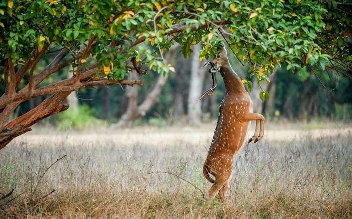 spot antelopes at gir