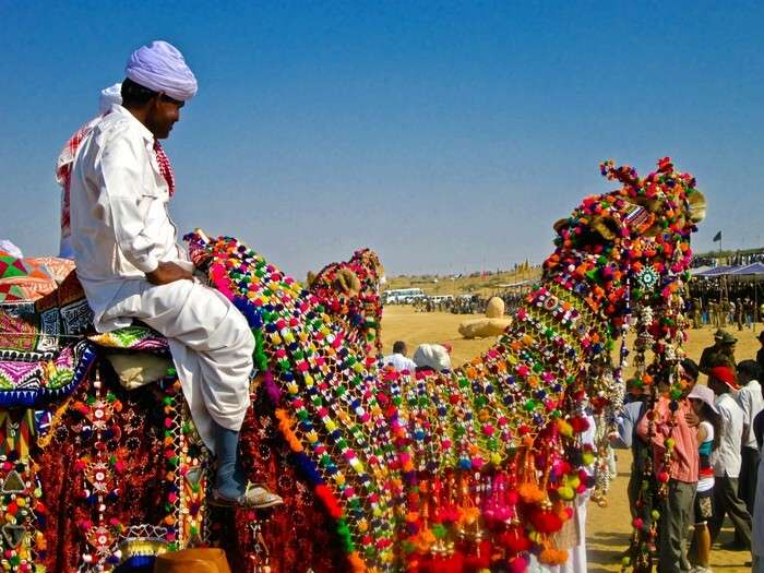 Decorated camels at Bikaner camel fest