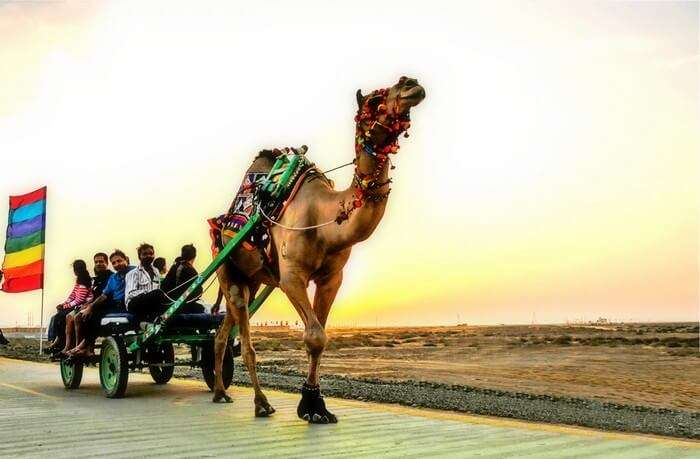 A camel cart ride during the Rann Utsav in Rann of kutch