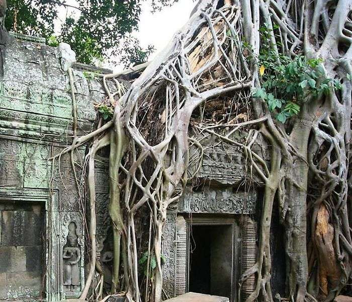 The World Heritage Angkor Wat Temple bound by massive roots of huge tree, Combodia