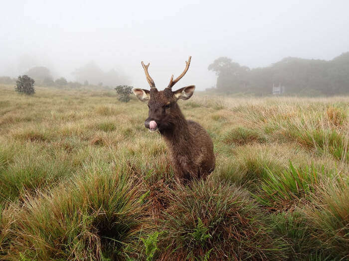 Horton-Plains-National-Park_18th oct
