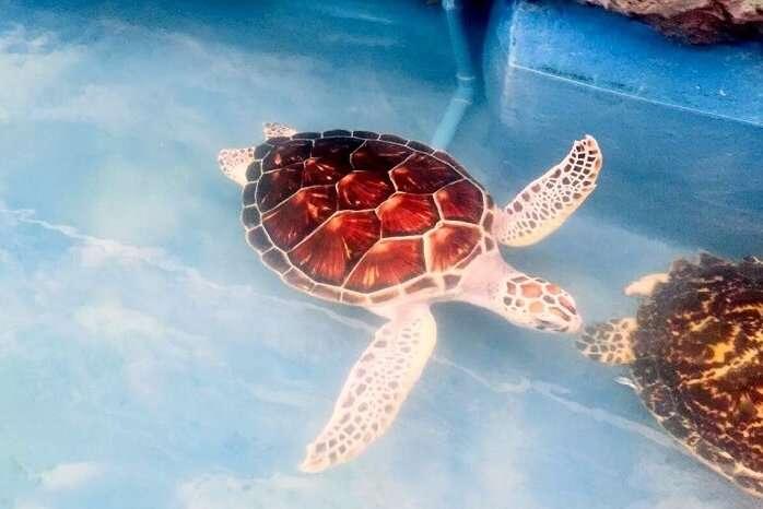 pooja thailand trip day 5 safari world turtles