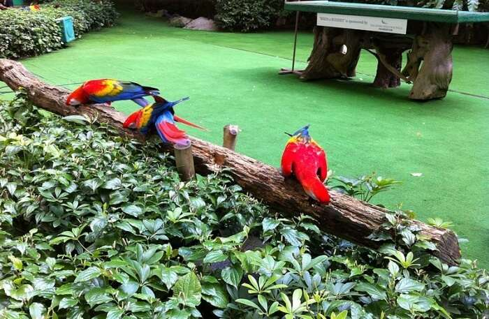 Jurong Bird Park View
