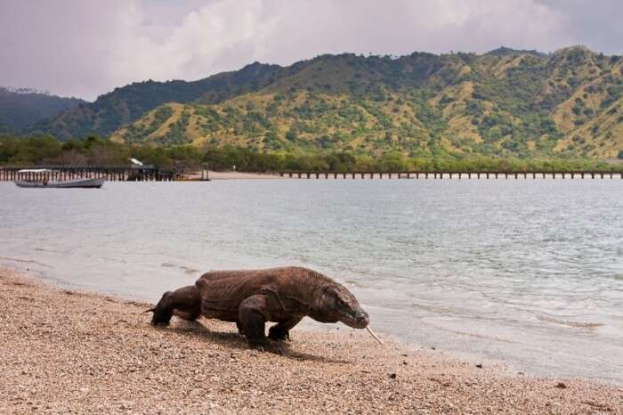 Komodo Island National Park