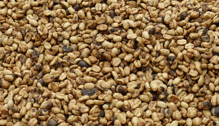 Luwak Coffee Beans