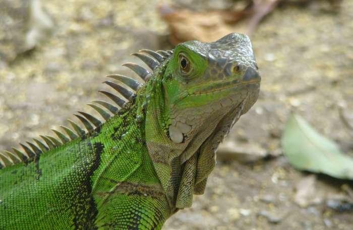 Reptile View