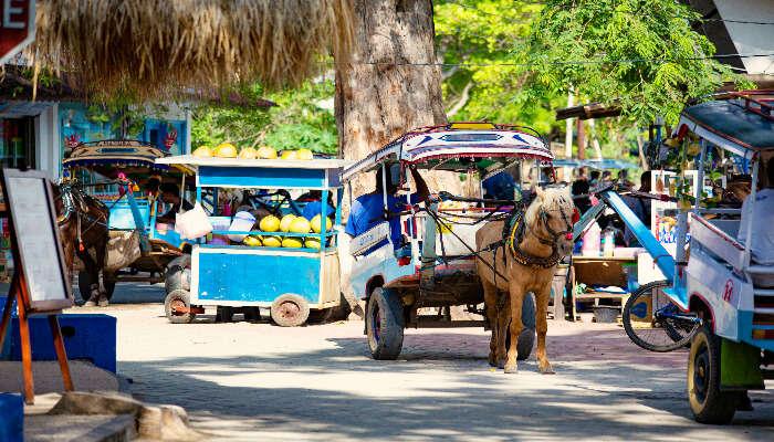 Ponny ride at Bali Zoo