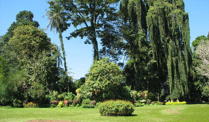 Royal Botanical Garden in Sri Lanka