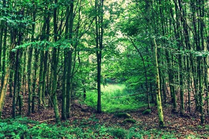Sanjay Van is one of the most untouched plantations in Delhi