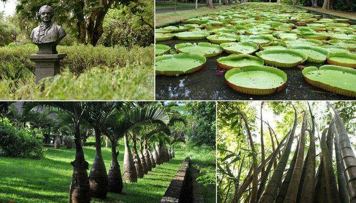 Sir Seewoosagur Ramgoolam Botanical Garden_24th oct