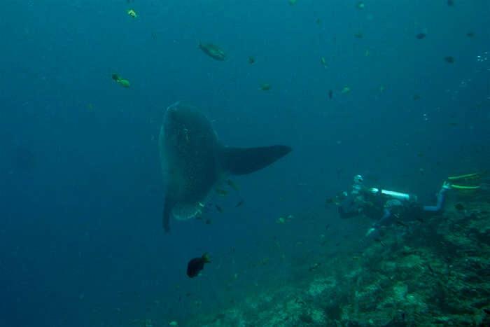 Snorkel Off Crystal Bay