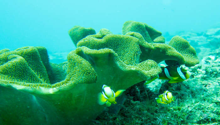 Snorkeling in Candidasa