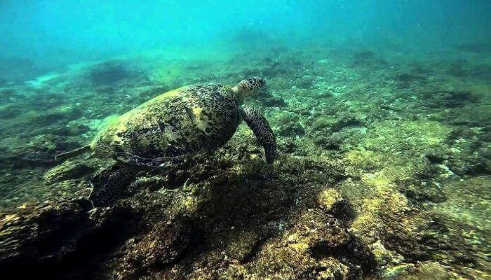 Snorkeling in Hikkaduwa_24th oct