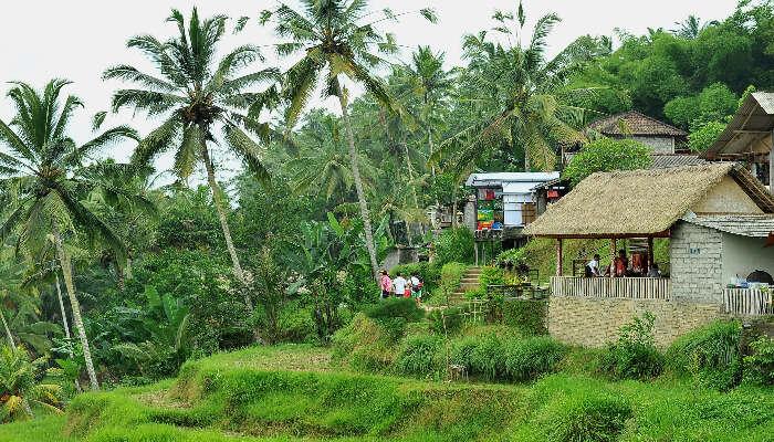 Tegalalang Village