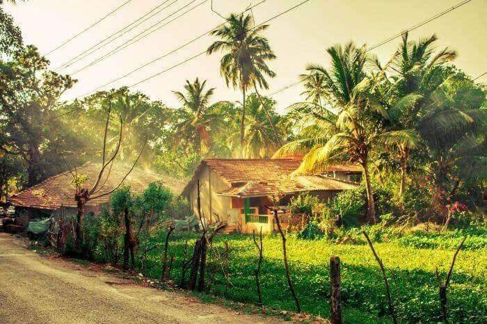 Walk through the rural side of Goa
