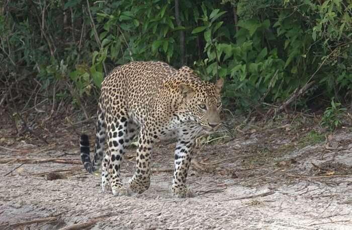 Cheetah View