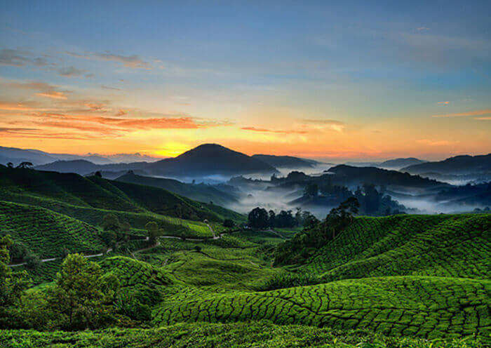 The landscape of Devikulam in Munnar with its tea estates and misty hills during sunset