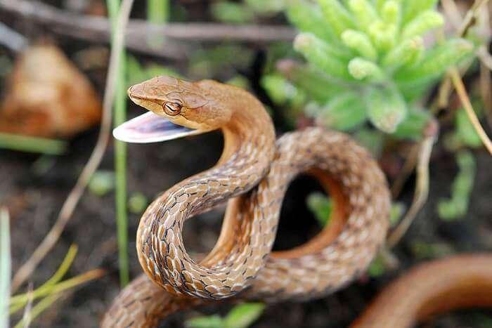 eravikulam national park munnar snake