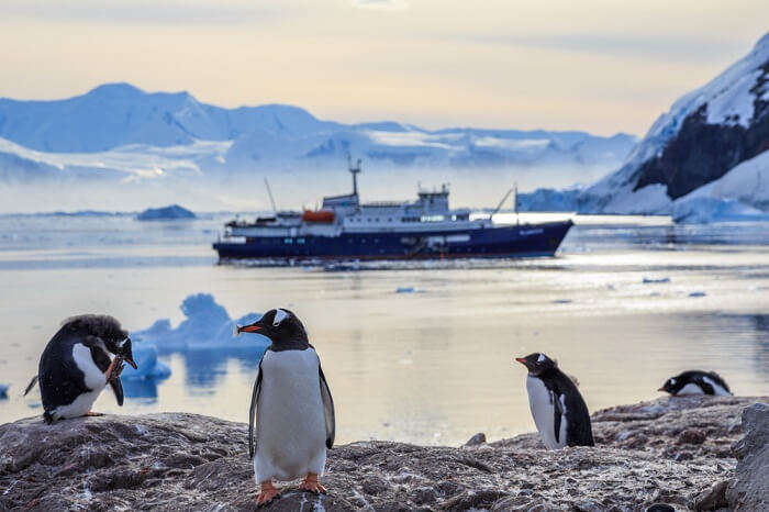 A snap of Gentoo penguins standing on the rocks and cruise ship in the background at Neco bay in Antarctica