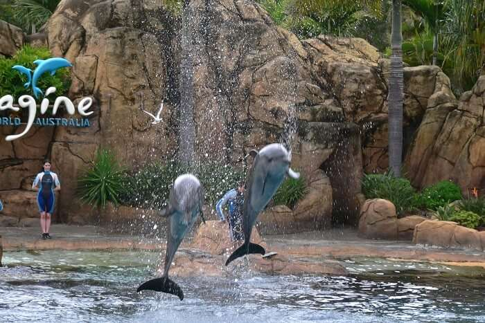 visit Sea World in queensland