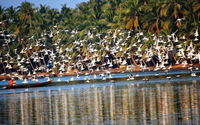 Bird watching with a houseboat stay on Vembanad Lake in Kumarakom, Kerala