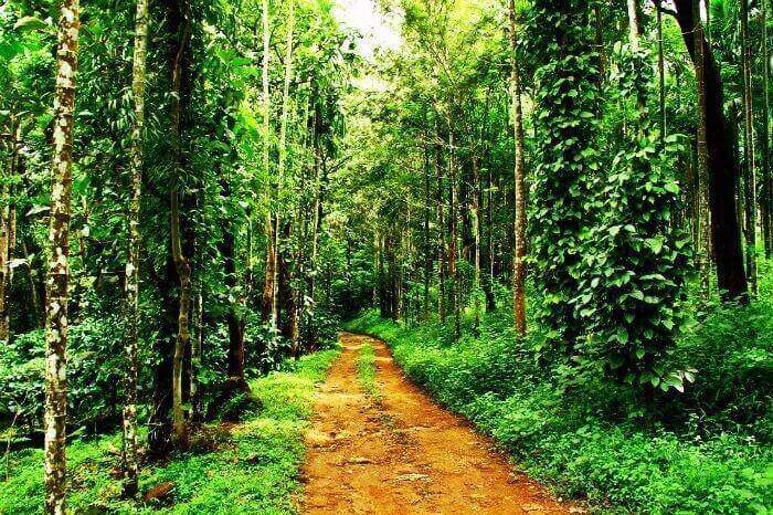 Stay at a coffee plantation resort in Wayanad, Kerala