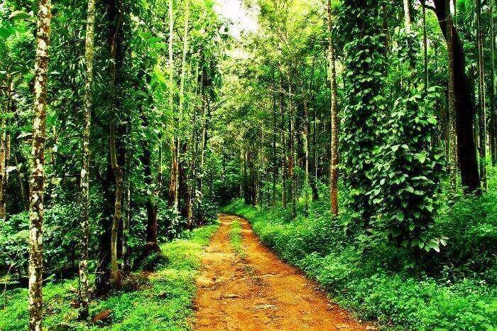 Stay at a coffee plantation resort in Wayanad, Kerala