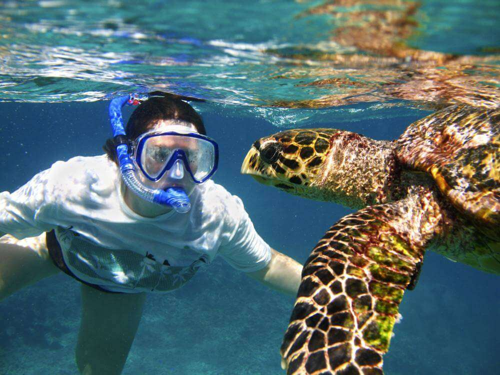 Discover Colorful fishes and turtles while Scuba Diving in Seychelles