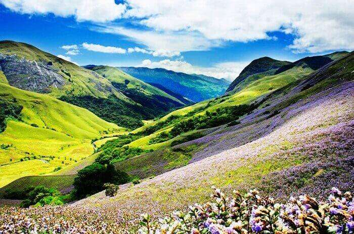 Eravikulam national Park, watch the Neelakurinji Bloom in Munnar, Kerala