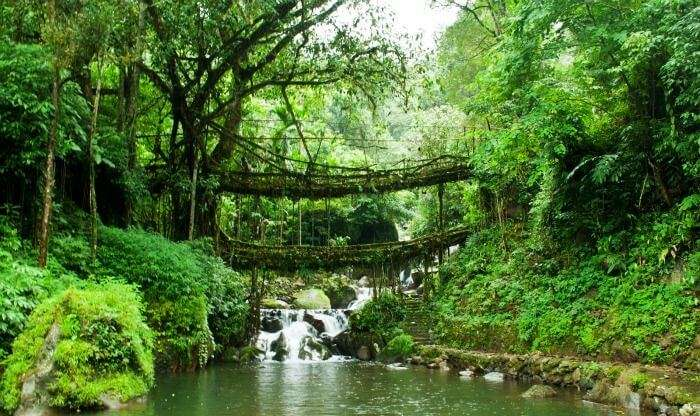 Natural root bridges of Khasi and Jaintia hills in Cherrapunji