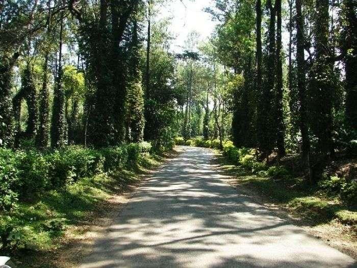 Chettalli is a small village on the Madikeri hill station, Karnataka