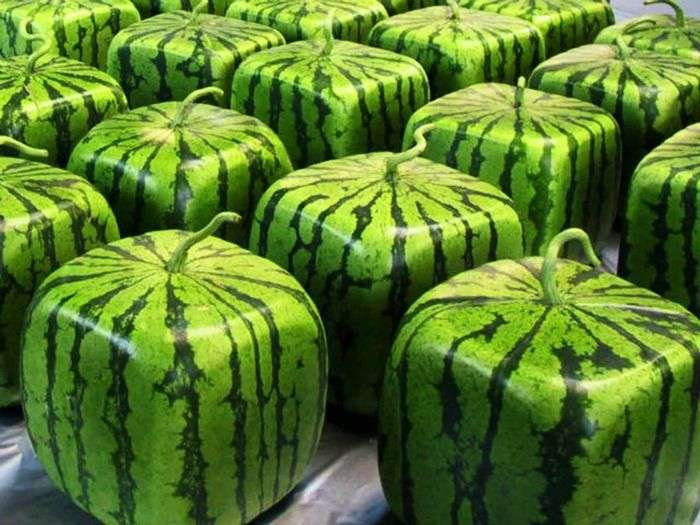 Cube Shaped Watermelons