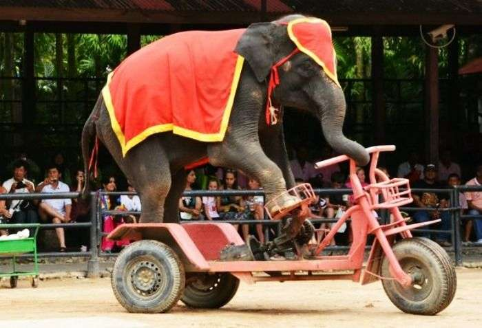 Watch the most dramatic Elephant show in Thailand