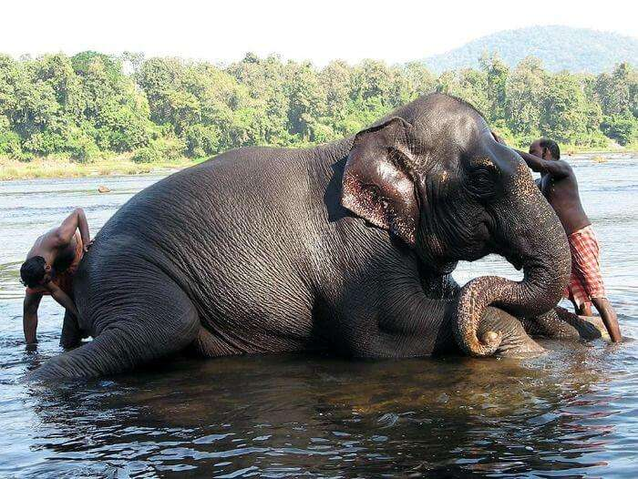 Kodanad Elephant Sanctuary, popular picnic spot in Kerala