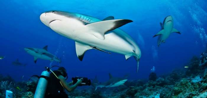 Diving and snorkelling, watching Baby Sharks in Maldives Islands