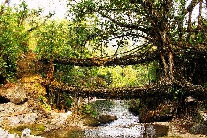 Root bridges in wettest Cherrapunji, Maghalaya