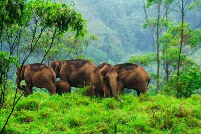 Wildlife at Thekkady, well-known tourist place in Kerala