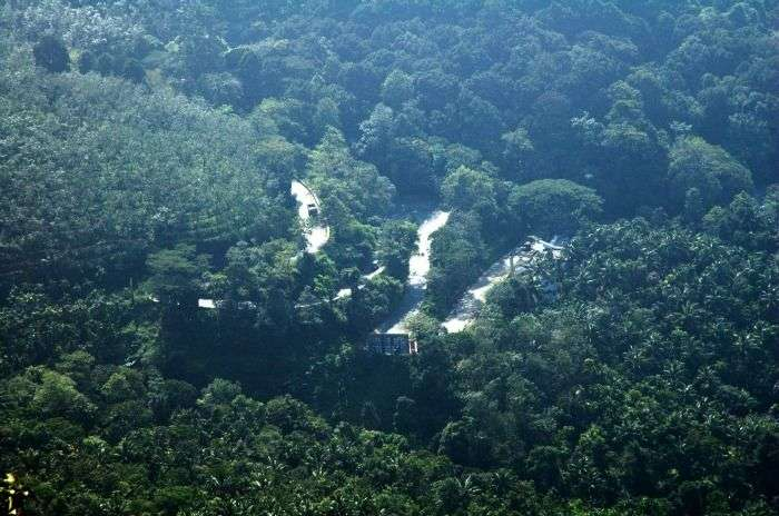 Wayanad Forests, a green paradise of kerala