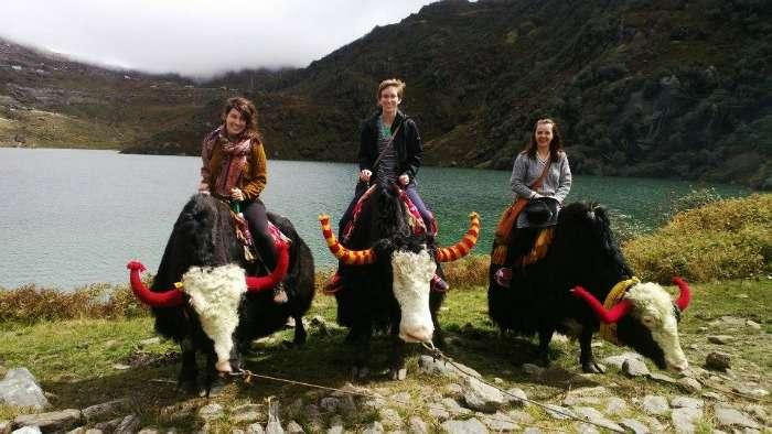 Famous Yak safari in Thangu and Dzongri around the Tsomogo Lake