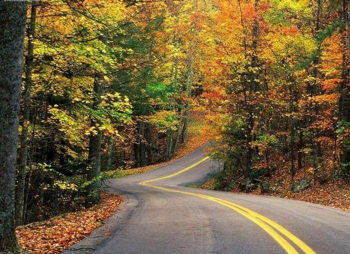 Autumn Fancy Road - see the nature change its colours
