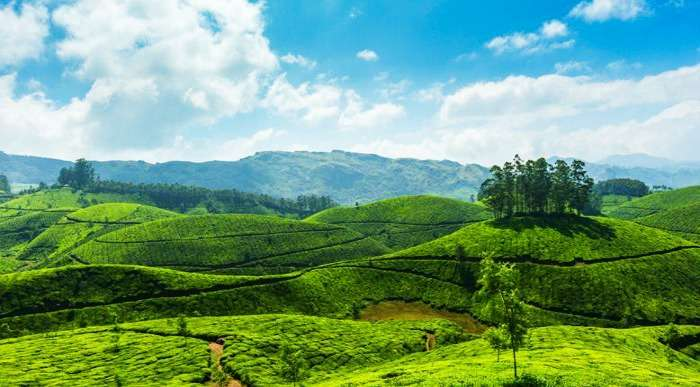 Lush green lands of Munnar hill station in South India