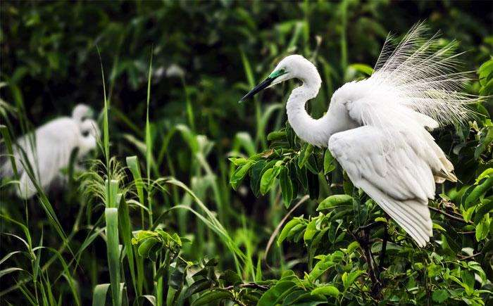 Indulge in bird watching at Pathiramanal Backwaters, Kerala