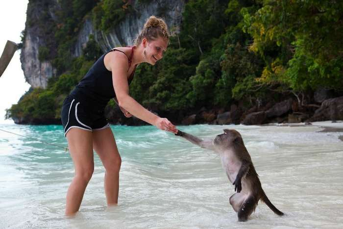 Shake hand with monkies at Monkey Beach in Thailand