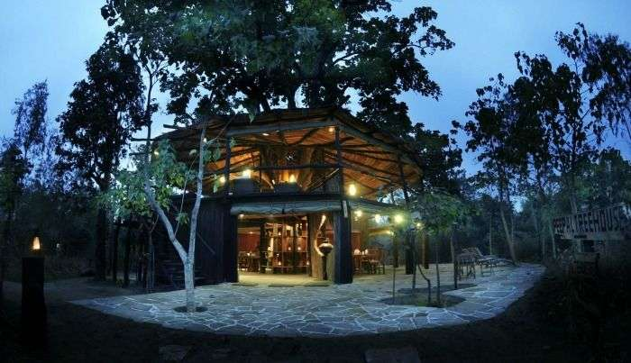 vibrant experiences at the resident treehouse, Bandhavgarh